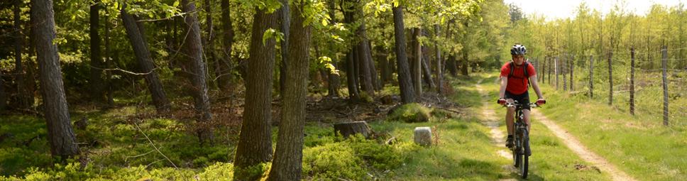 Mountainbiker passiert einen Eichenwald im Spessart