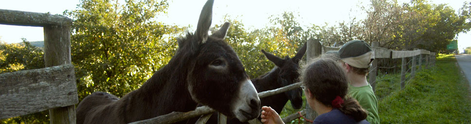 Esel streicheln - Kontakt zu Tieren