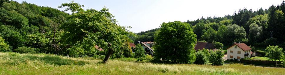 Umgeben vom Spessartwald liegt Neuhof