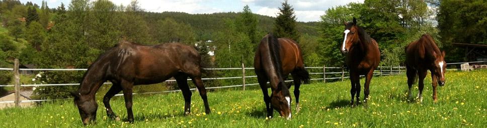 Pferdeglück auf der Koppel