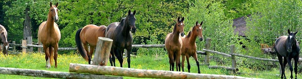 Reiterferien: Reitpferde im Auslauf