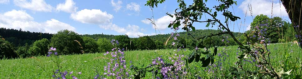 Spessartlandschaft bei Rieneck im Spessart