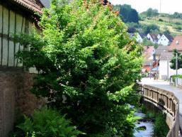Frammersbach im Lohrbachtal