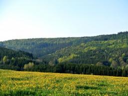 Spessartwald bei Aura i. Sinngrund
