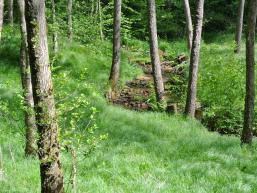 Wanderweg entlang der Fließenbach am Wald- und Wassererlebnis