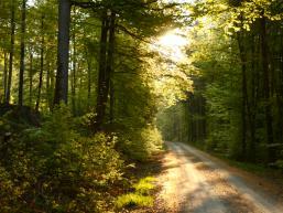 Nordic Walking Weg Trockenbach