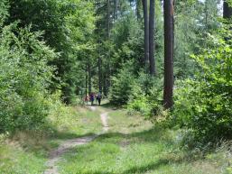 Wanderweg zum Kloster Einsiedel