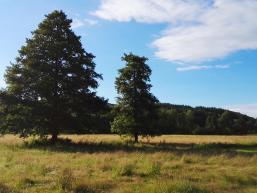 Wiese an der Nordic Walking Route