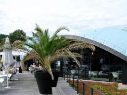 Ruhen unter Palmen - Urlaubserlebnisse