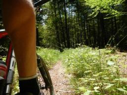 Ab durch den Spessartwald