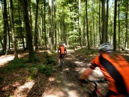Fahraktiver Trail auf Waldboden