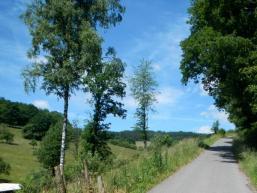 Flurweg zur Waldgemarkung Gresselwald