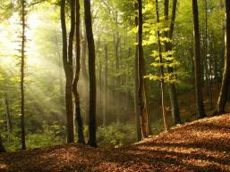 Romantische Waldstimmung