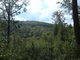 Bewaldete Höhenzüge