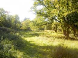Eine Waldlichtung im Spessart