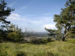Blick vom Sodenberg