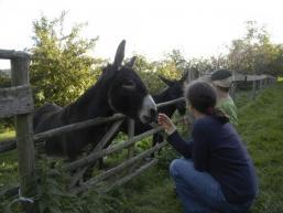 Esel am ehemaligen Gasthof Sodenberg