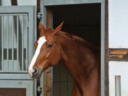 Pferd in seiner Box