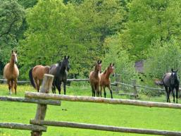 Pferdekoppel Hofgut Hurzfurt