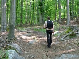 Lust auf Wandern im Spessartwald