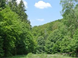Malerisches Spessarttal bei Rieneck