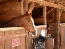 Gute Unterkunft für die Pferde