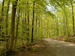 Bäume und Waldweg im Wermertsgrund