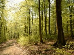 Herrliche Buchenwälder begleiten die Wanderung