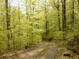 Waldweg und Bäume beim Tiefes Tal