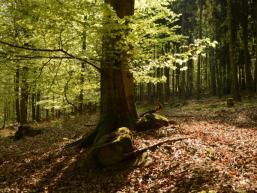 Bäume und Laub im Wermertsgrund