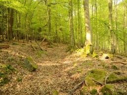 Naturwanderweg