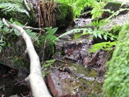 Frisches Quellwasser am Hexenbrünnchen