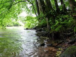 Flussromantik an der Sinn