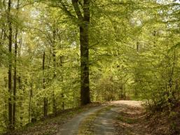 Wandern auf Forstwegen