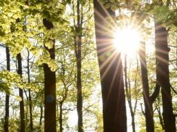 Sonne im Mischwald