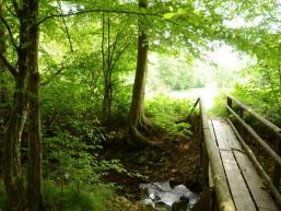 Wandern zum Tretstein im Saaletal