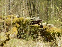 Steineiche bei der Bettlersruh