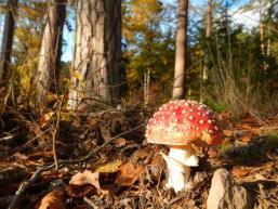 Spessartwald mit Pilzen im Herbst