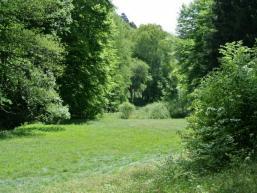 Wald- und Wiesenlandschaft im Spessart