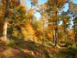 Rienecker Wanderweg R4 durchs Fließenbachtal
