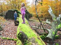Abenteuerspielplatz Wald