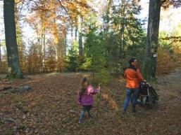 Herbstlicher Spessartwald erleben