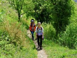 Wanderpfad zur Homburg / Gössenheim
