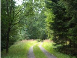 Dein Wanderweg im Spessart
