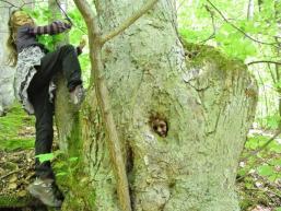 Wandern im Wald, ein Erlebnis für Kinder