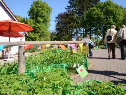 Riesige Auswahl an Kräutern und Heilpflanzen
