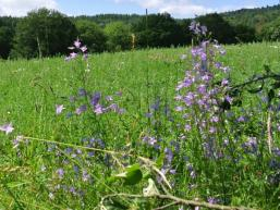 Wildkräuter und Blumen auf Hohenroth