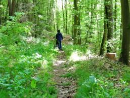 Wanderlust durch den Spessartwald
