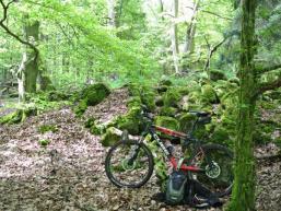 Waldromantik im Spessart