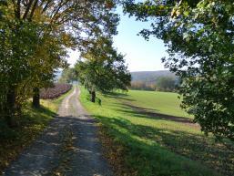 Feldweg zum genüsslichen Radfahren
